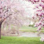 astenia primaveral oviedo
